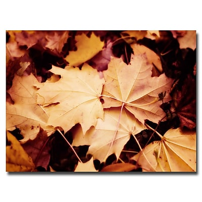 Trademark Fine Art Ariane Moshayedi 'Fall Leaves' Canvas Art 22x32 Inches