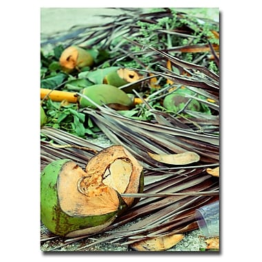 Trademark Fine Art Ariane Moshayedi 'Coconut Jungle' Canvas Art 30x47 Inches