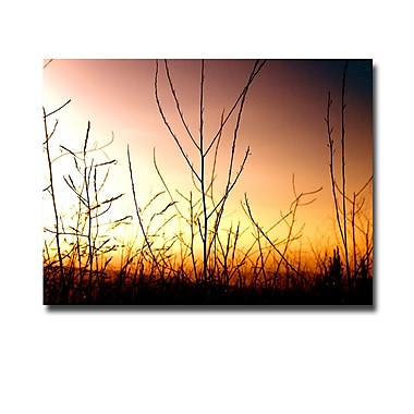 Trademark Fine Art Ariane Moshayedi 'Brushfire Fairytales' Canvas Art 24x32 Inches