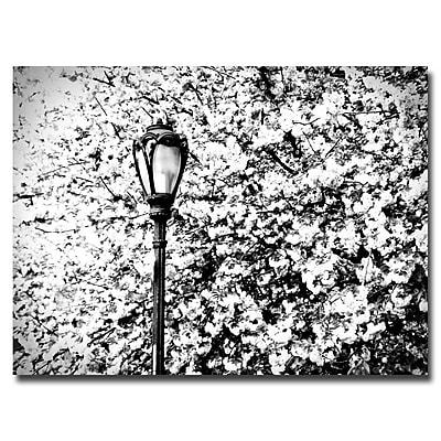 Trademark Fine Art Ariane Moshayedi 'Streetlamp' Canvas Art 16x24 Inches