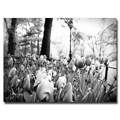 Trademark Fine Art Ariane Moshayedi 'Blooming Tulips' Canvas Art 22x32 Inches