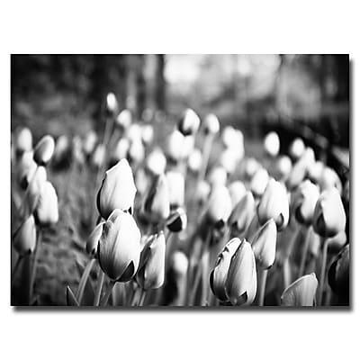 Trademark Fine Art Ariane Moshayedi 'Upclose Tulips' Canvas Art 22x32 Inches