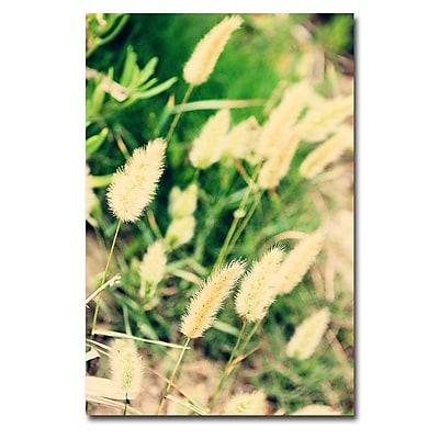 Trademark Fine Art Ariane Moshayedi 'Beach Flowers' Canvas Art 30x47 Inches