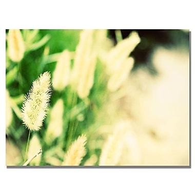Trademark Fine Art Ariane Moshayedi 'Beach Flower' Canvas Art 16x24 Inches
