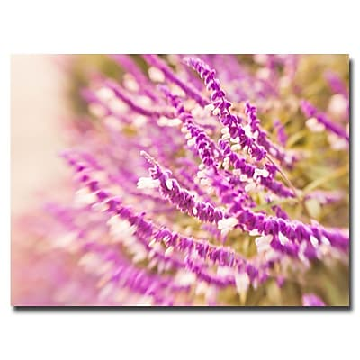 Trademark Fine Art Ariane Moshayedi 'Lavender' Canvas Art 16x24 Inches