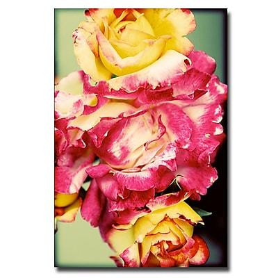 Trademark Fine Art Ariane Moshayedi 'Rustic Roses' Canvas Art 22x32 Inches