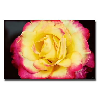 Trademark Fine Art Ariane Moshayedi 'Yellow Rose' Canvas Art 16x24 Inches