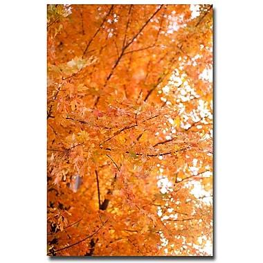 Trademark Fine Art Ariane Moshayedi 'Orange Leaves' Canvas Art 16x24 Inches