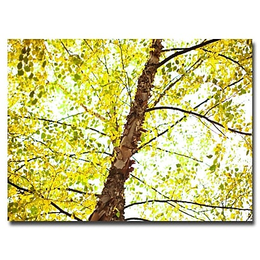 Trademark Fine Art Ariane Moshayedi 'Prickly Trunk' Canvas Art 16x24 Inches