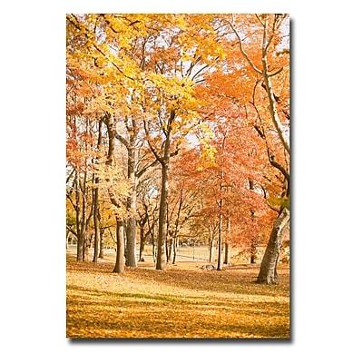 Trademark Fine Art Ariane Moshayedi 'Central Park Trees' Canvas Art 16x24 Inches