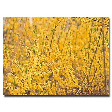 Trademark Fine Art Ariane Moshayedi 'Yellow Buds' Canvas Art 30x47 Inches