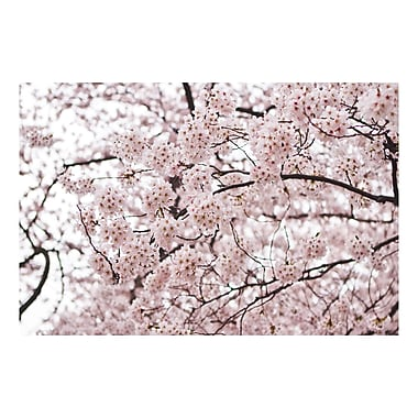 Trademark Fine Art Ariane Moshayedi 'Cherry Blossoms' Canvas Art 16x24 Inches