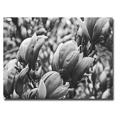 Trademark Fine Art Ariane Moshayedi 'Closeup Magnolias' Canvas Art 30x47 Inches