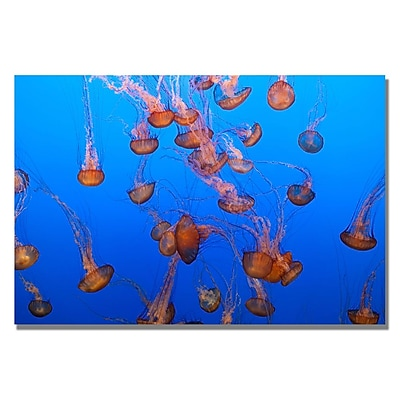 Trademark Fine Art Ariane Moshayedi 'Color Jellyfish' Canvas Art 22x32 Inches