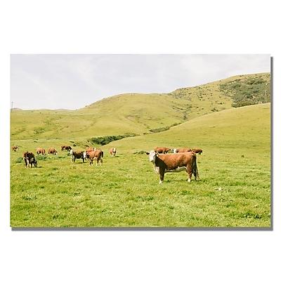 Trademark Fine Art Ariane Moshayedi 'Cow Staredown' Canvas Art 22x32 Inches