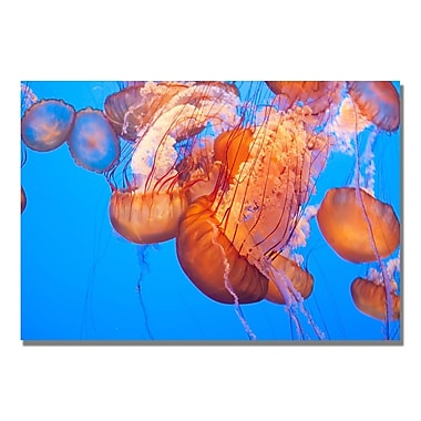 Trademark Fine Art Ariane Moshayedi 'Jellyfish Close' Canvas Art 16x24 Inches