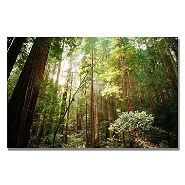 Trademark Fine Art Ariane Moshayedi 'Muir Woods' Canvas Art 16x24 Inches