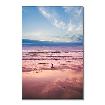 Trademark Fine Art Ariane Moshayedi 'Seagull Reflections II' Canvas Art 22x32 Inches