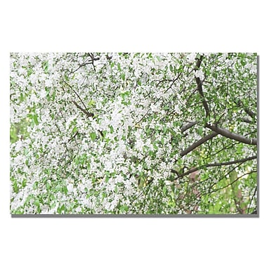 Trademark Fine Art Ariane Moshayedi 'Flowers in the Trees' canvas art
