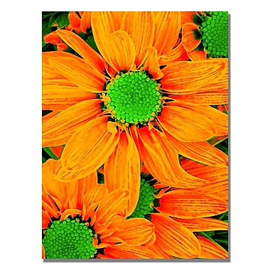 Trademark Fine Art Amy Vangsgard 'Pop Daisies X' Canvas 24x32 Inches