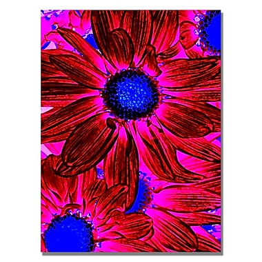 Trademark Fine Art Amy Vangsgard 'Pop Daisies XI' Canvas 18x24 Inches