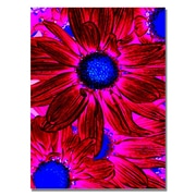 Trademark Fine Art Amy Vangsgard 'Pop Daisies XI' Canvas