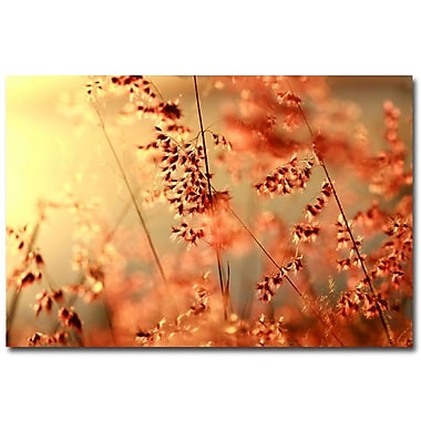 Trademark Fine Art Beata Czyzowska Young 'Sunset Conversations' Canvas Art 16x24 Inches