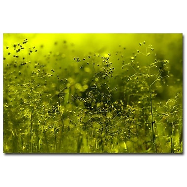 Trademark Fine Art Beata Czyzowska Young 'Symphony in Green' Canvas Art