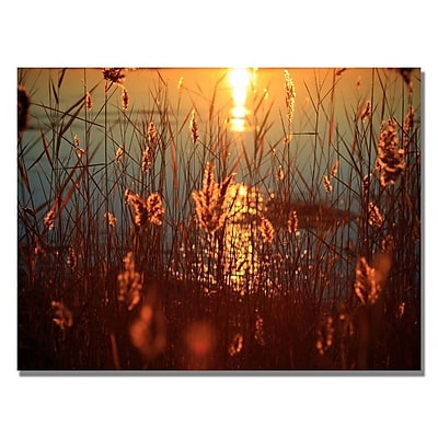 Trademark Fine Art Beata Czyzowska 'Summer Nights' Canvas Art