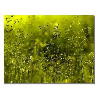 Trademark Fine Art Beata Czyzowska 'Symphony in Green' Canvas Art