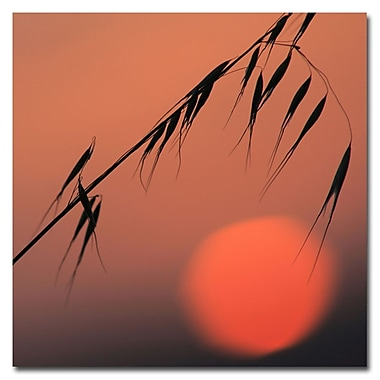 Trademark Fine Art Beata Czyzowska 'Sunset Sonata' Canvas Art 24x24 Inches