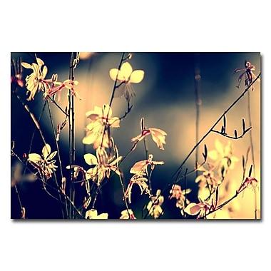 Trademark Fine Art Beata Czyzowska Young 'Sunshine in my Garden' Canvas Art 16x24 Inches