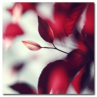 Trademark Fine Art Beata Czyzowska Young 'When Spring is Red' Canvas Art 24x24 Inches