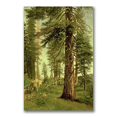 Trademark Fine Art Albert Bierstadt 'California Redwoods' Canvas Art