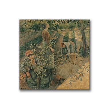 Trademark Fine Art Camille Pissarro 'The Apple Pickers' Canvas Art
