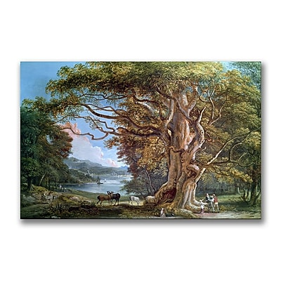 Trademark Fine Art Paul Sandby 'An Ancient Beech Tree 1794' Canvas Art 16x24 Inches