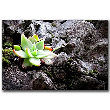 Trademark Fine Art Rock Flower by Colleen Proppe Canvas Ready to Hang