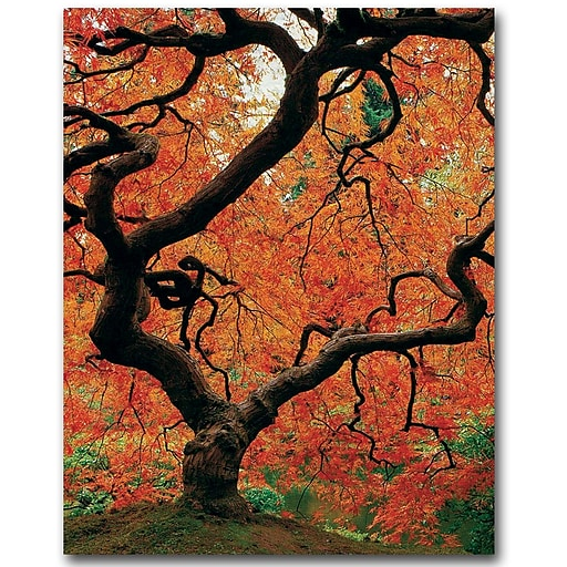 Trademark Fine Art David Farley 'Japanese Tree I' Canvas Art 35x47 Inches