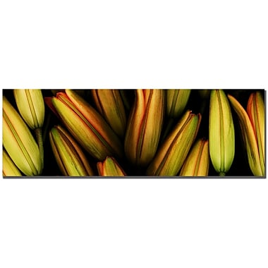 Trademark Fine Art Preston 'Lilly' Canvas Art