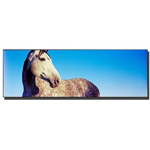 Trademark Fine Art Kentucky White Horse by Preston-Ready to Hang Art 16x47 Inches