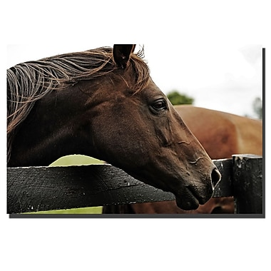Trademark Fine Art Horse 22 by Preston-Canvas Art. Ready to Hang
