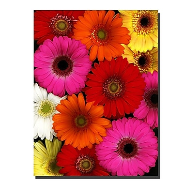 Trademark Fine Art Preston 'Flowers' Canvas Art Ready to Hang 35x47 Inches
