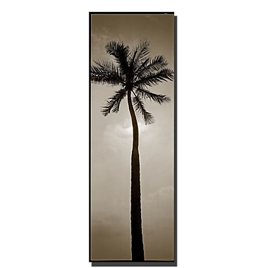 Trademark Fine Art Palm by Preston-Ready to Hang Art