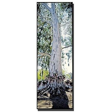 Trademark Fine Art Spain Tree by Preston-Ready to Hang Art
