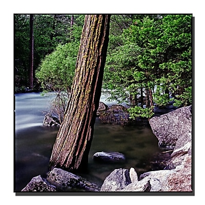 Trademark Fine Art Yosemite I by Preston-Ready to Hang Art 35x35 Inches