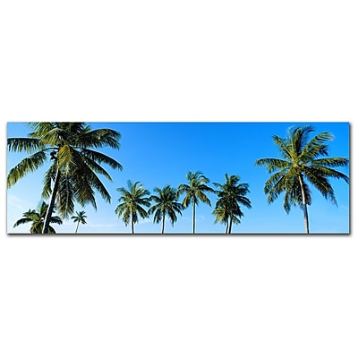 Trademark Fine Art Palms by Preston-Ready to Hang Art 8x24 Inches