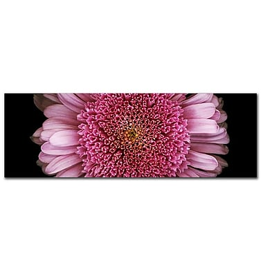Trademark Fine Art Daisy by Preston-Ready to Hang Art 10x32 Inches
