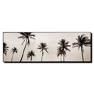 Trademark Fine Art Black & White Palms by Preston-Ready to Hang Art 10x32 Inches