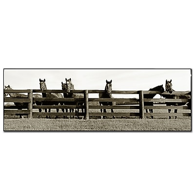 Trademark Fine Art Thoroughbreds' by Preston-Ready to Hang Art 8x24 Inches