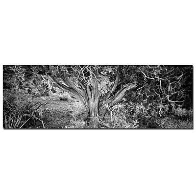 Trademark Fine Art Preston 'Roots' Canvas Ary 12x32 Inches